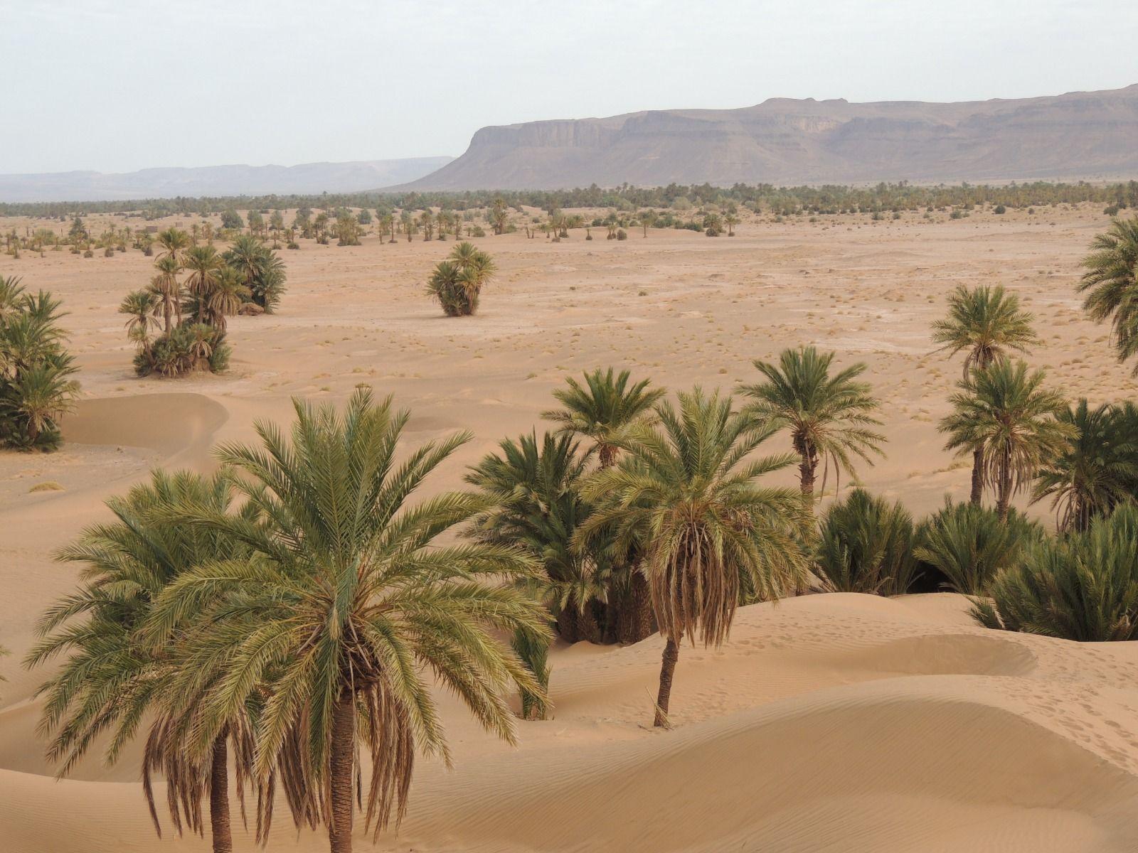 Découvrir le Maroc avec un Trek au Sahara